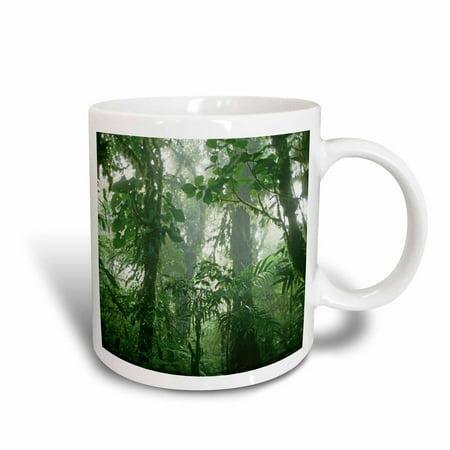 3dRose Costa Rica, Monteverde Cloud Forest, Rainforest - SA22 KSC0191 - Kevin Schafer, Ceramic Mug,