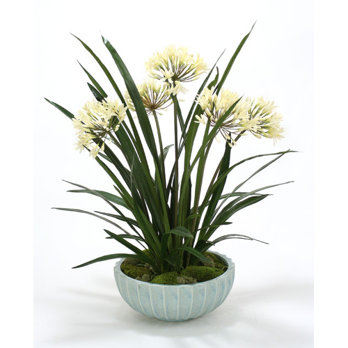 Distinctive Designs Cream White Agapanthas in Bowl
