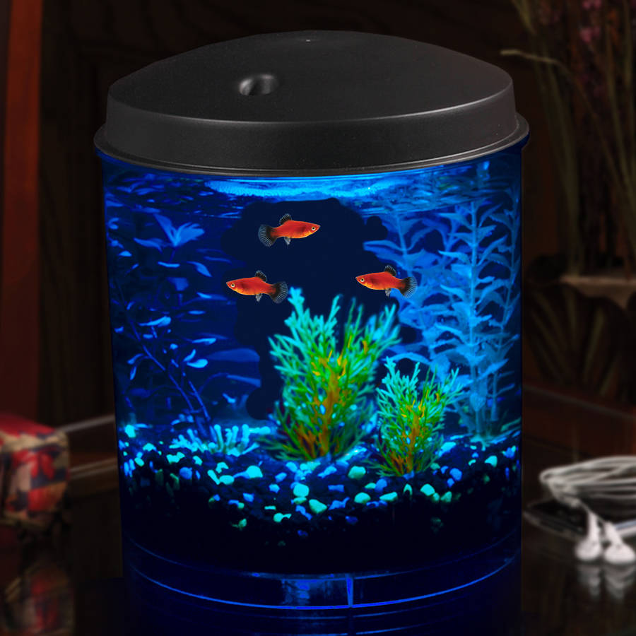 Hawkeye 2 gallon aquarium kit with filter and led lighting for Blue light for fish tank