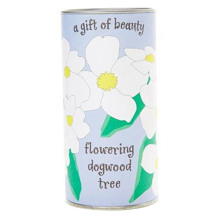 Flowering Dogwood | Tree Seed Grow Kit | The Jonsteen Company