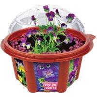 DuneCraft Vivian Violet Mini Dome Garden