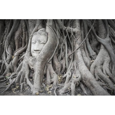 Buddha Statue Head Covered by Tree Roots at Wat Phra Mahathat Temple, Ayutthaya Province, Thailand Print Wall Art By Oscar Dominguez (Inflatable Oscar Statue)