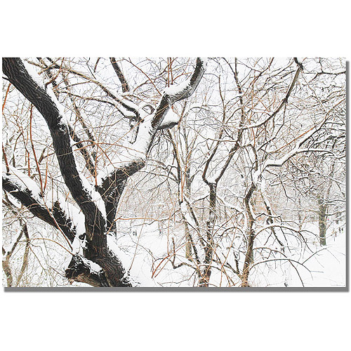 "Trademark Fine Art ""Snowy Trees"" Canvas Wall Art by Ariane Moshayedi"