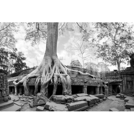 Angkor Wat Cambodia. Ta Prom Khmer Ancient Buddhist Temple in Jungle Forest. Famous Landmark, Place Print Wall Art By SergWSQ - Jungle Theme Prom