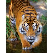 Masterpieces Bengal Tiger 100 Pc Puzzle