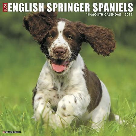 Willow Creek Press 2019 Just English Springer Spaniels Wall Calendar