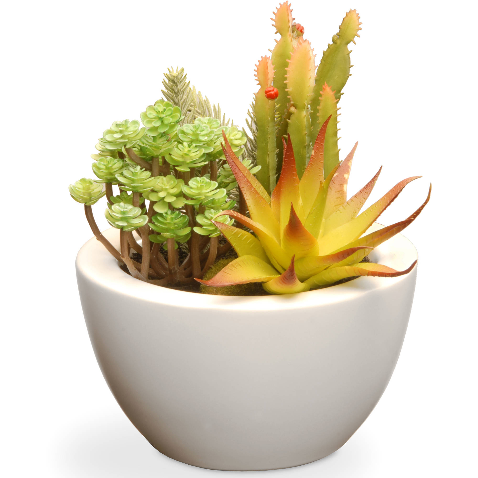 National Tree RAS-XF119W 9.8 in. Succulent in Ceramic Pot