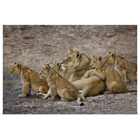 Pride Poster (Great BIG Canvas | Rolled Scott Stulberg Poster Print entitled African Lion Pride)