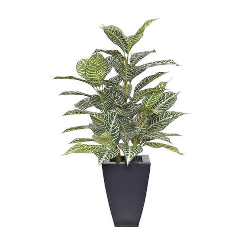 House of Silk Flowers Inc. Artificial Zebra Plant in Planter