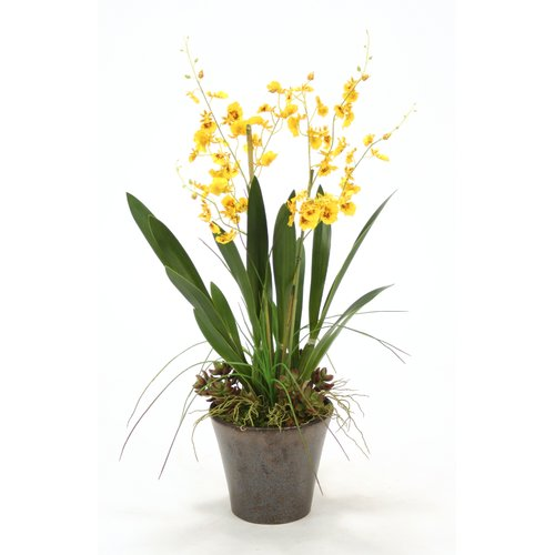 Distinctive Designs Oncidium Orchids with Grass and Succulents in Orchid Pot