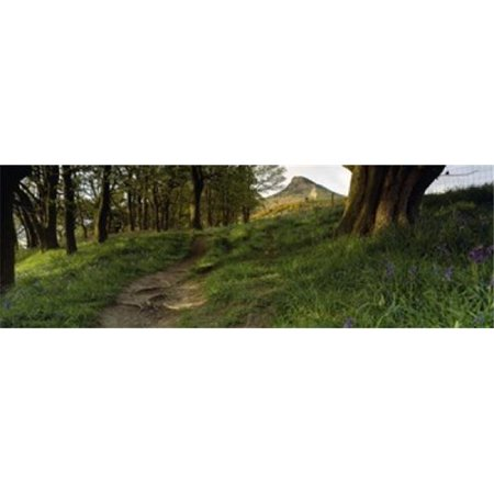 Panoramic Images PPI93310L Path Running Through A Forest  Newton Wood  Yorkshire  England  United Kingdom Poster Print by Panoramic Images - 36 x 12 - image 1 of 1