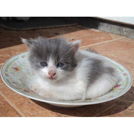 Canvas Print Pet Feline Mammal Animal Cat Kitten Kitty Stretched Canvas 10 x 14