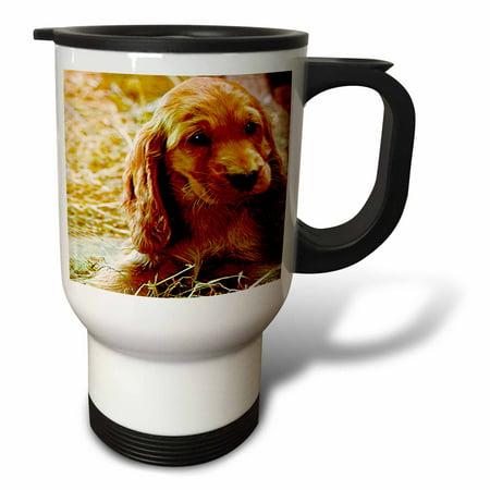 3dRose Irish Setter Puppy, Travel Mug, 14oz, Stainless Steel
