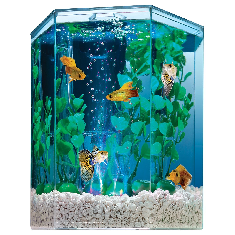 Tetra 1-Gallon Hexagon Aquarium Kit with LED Bubbler
