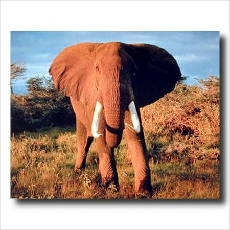 Kid Art Elephant - African Elephant Kids Room Wall Picture Art Print