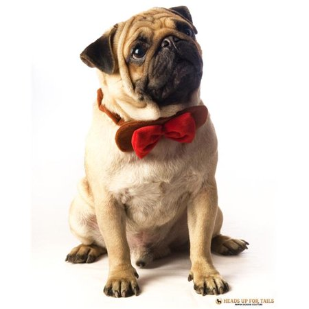 Heads Up for Tails HUFTAC147 Tie The Knot Dog Bow Tie, Brown & Red Velvet - Small