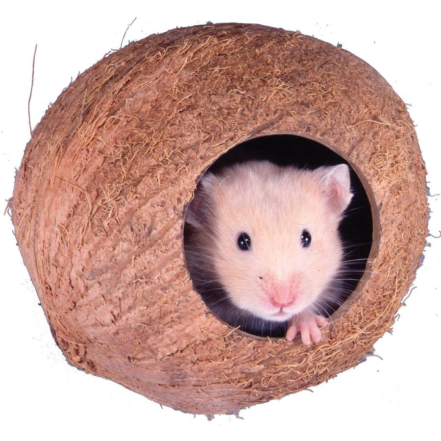 "Penn Plax SAM106 4"" Coconut Cabana For Hamsters and Mice"