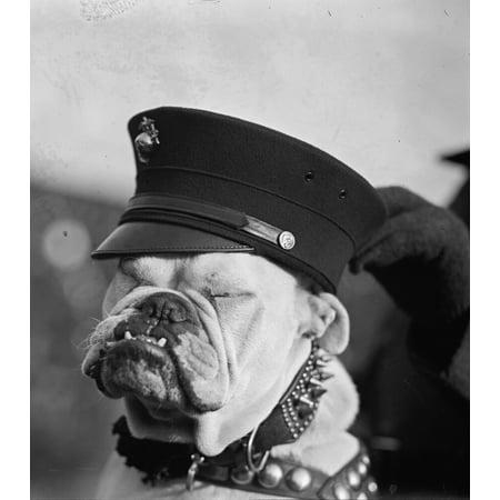 Marine Corps Bulldog in Helmet with Globe & Anchor Poster Print Marine Corps Helmet