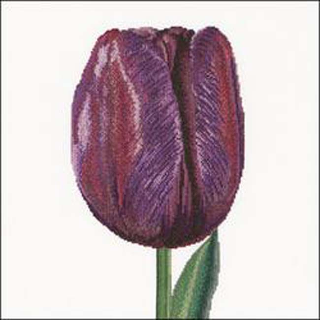 """Thea Gouverneur Counted Cross Stitch Kit 13.25""""X14""""-Purple Triumph Tulip On Aida (16 Count)"""