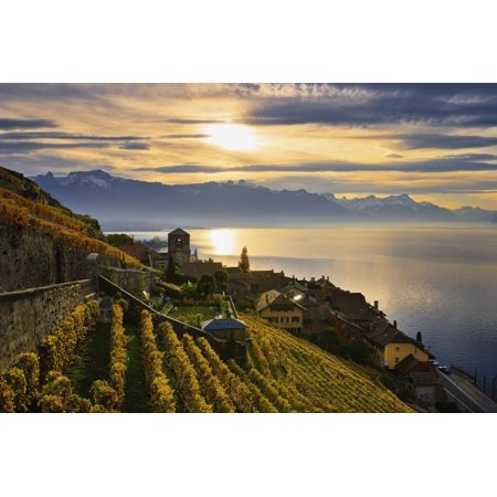 Switzerland Lavaux Unesco World Heritage region Vineyards Saint-Saphorin Stretched Canvas - Yves Marcoux  Design Pics (19 x