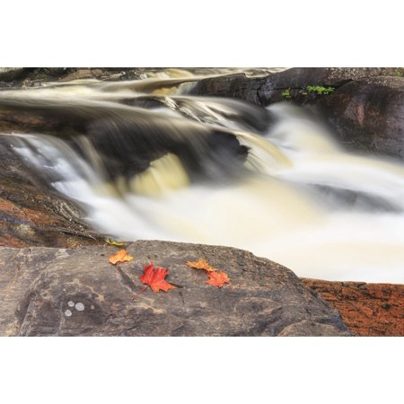 Red maple leaves on rock at Stubbs Falls Arrowhead Provincial Park near Huntsville Ontario Canada Stretched Canvas - Ken Gillespie  Design Pics (19 x 12) ()