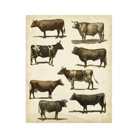 Antique Cow Chart Print Wall Art By Vision Studio