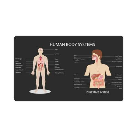 MKHERT Funny Complete Chart of Different Human Body Organ System Doormat Rug Home Decor Floor Mat Bath Mat 30x18 inch