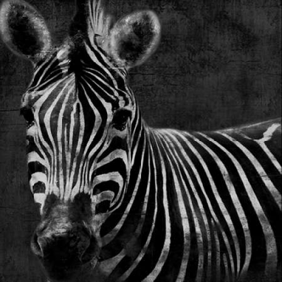 Zebra Black And White Poster Print by Jace Grey