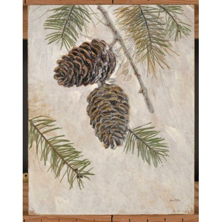Arnie Fisk Stretched Canvas Art - Rustic Pine Cones - Medium 20 x 24 ...