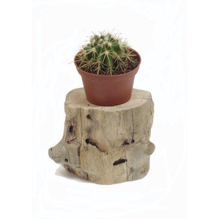 Driftwood Planter w/Plant #17