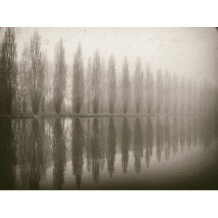 Trees in Fog V Print Wall Art By Jody Stuart - Jody Bergsma Art
