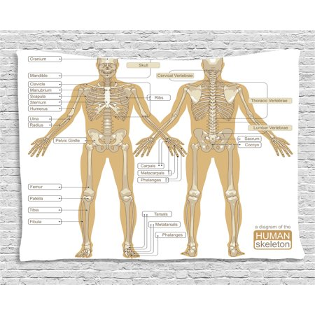 Human Anatomy Tapestry Diagram Of Human Skeleton System With Titled