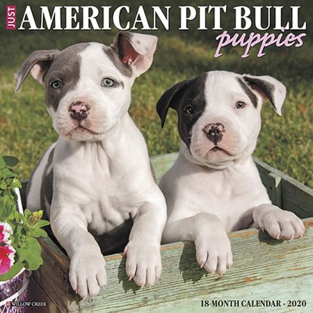 Willow Creek Press 2020 Just American Pit Bull Terrier Puppies Wall Calendar Puppies Wall Calendar
