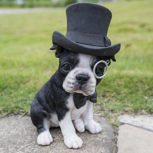 BOSTON TERRIER W/TOP HAT, SPECTACLE, & BOW TIE STATUE