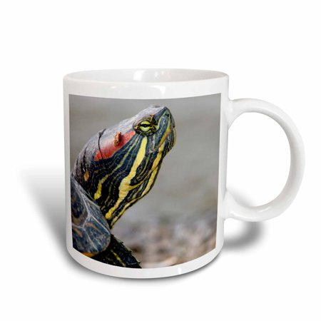 3dRose Red-eared pond slider turtle, British Columbia-CN02 PCL0101 - Paul Colangelo, Ceramic Mug, 11-ounce Red Eared Sliders Turtles