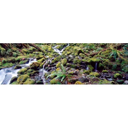 - Waterfall in a forest Olympic National Park Olympic Peninsula Washington State USA Stretched Canvas - Panoramic Images (27 x 9)