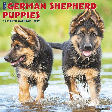 2019 Just German Shepherd Puppies Wall Calendar, by Willow Creek Press