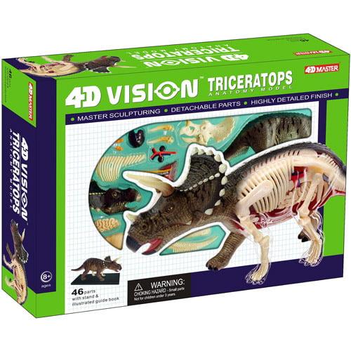 Triceratops Dinosaur Anatomy Model