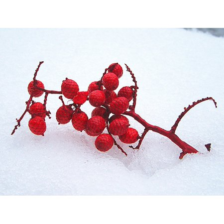 Winter Snow Decorations (Peel-n-Stick Poster of Red Snow Winter Branch Decoration White Cold Poster 24x16 Adhesive Sticker Poster)