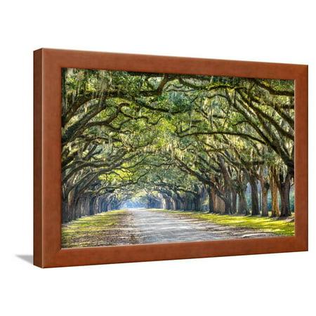 - Savannah, Georgia, USA Oak Tree Lined Road at Historic Wormsloe Plantation. Framed Print Wall Art By SeanPavonePhoto