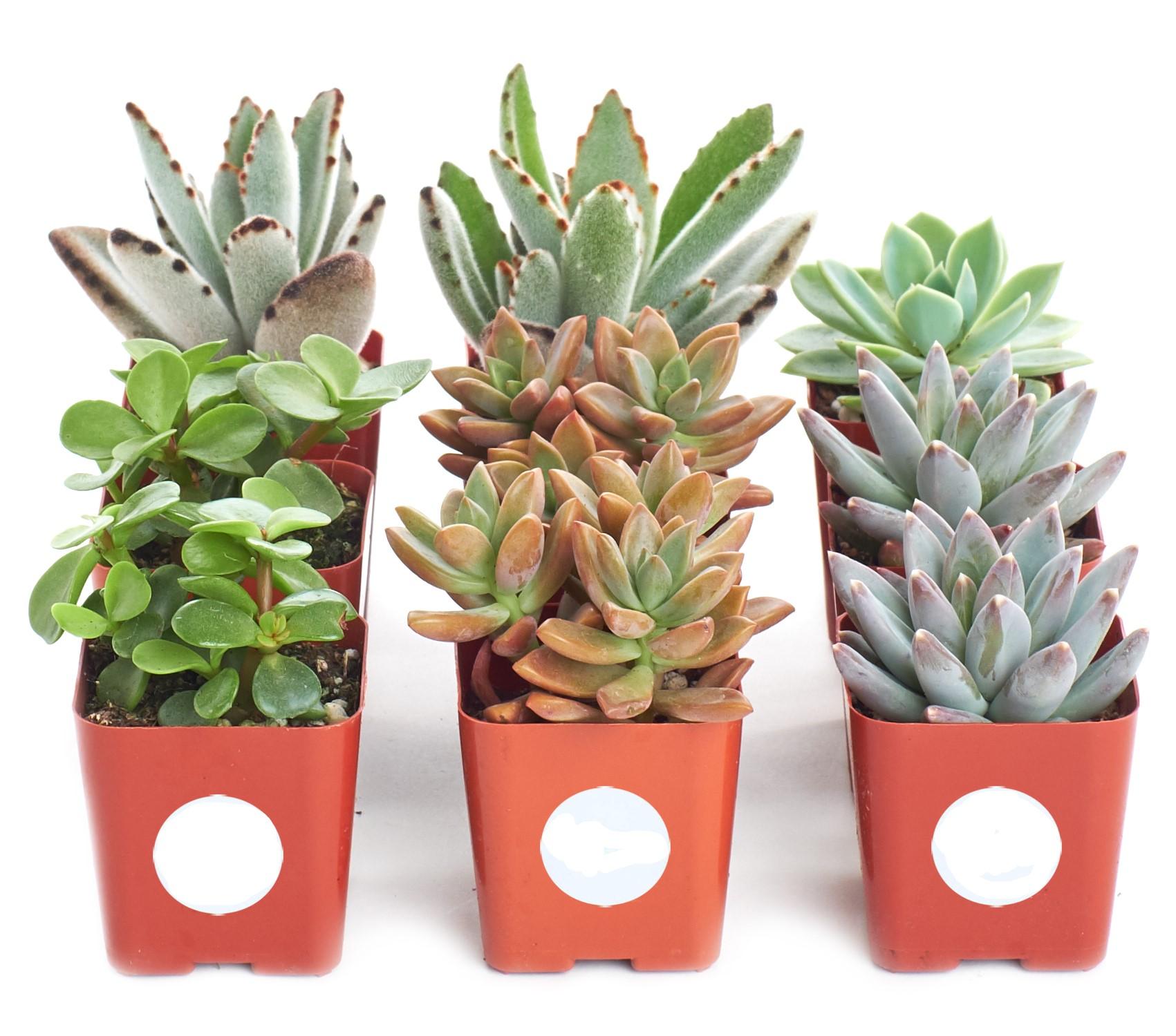 Succulent Planters Walmart Com