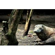Canvas Print Indonesia Komodo Reptile Dragon Lizard Wild Stretched Canvas 10 x 14