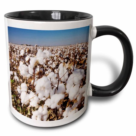 3dRose Cotton Plant, Agriculture, Lubbock, Texas - NA02 RNU0522 - Rolf Nussbaumer - Two Tone Black Mug, 11-ounce