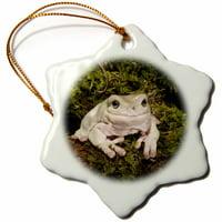 3dRose White's Treefrog, Native to Australia - US39 JMC0069 - Joe and Mary Ann McDonald - Snowflake Ornament, 3-inch