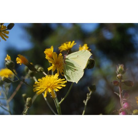 LAMINATED POSTER Nature Butterfly Flower Meadow Poster Print 24 x 36