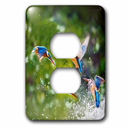 3dRose Many Exotic Birds in the Free Nature Wildlife Jungle Animal - 2 Plug Outlet Cover (lsp_254229_6)
