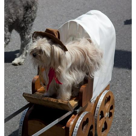Canvas Print Dog Street Fun Pet Show Parade Cute Costume Stretched Canvas 10 x - Parade Costumes