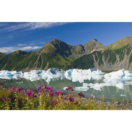 Scenic Of Fireweed On The Shore Of Bear Glacier Lake With Icebergs From Bear Glacier Kenai Fjords National Park Kenai Peninsula Southcentral Alaska Summer Canvas Art - Michael DeYoung  Design Pics (19