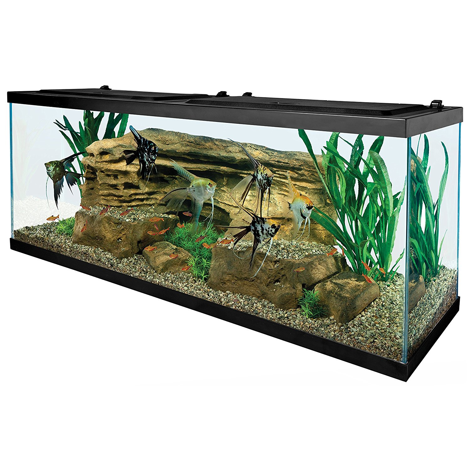 Tetra 55 gallon aquarium starter tank with net food for Koi pond heaters for sale