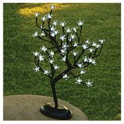 """18""""Wht 48Lt Bonsai Tree"""